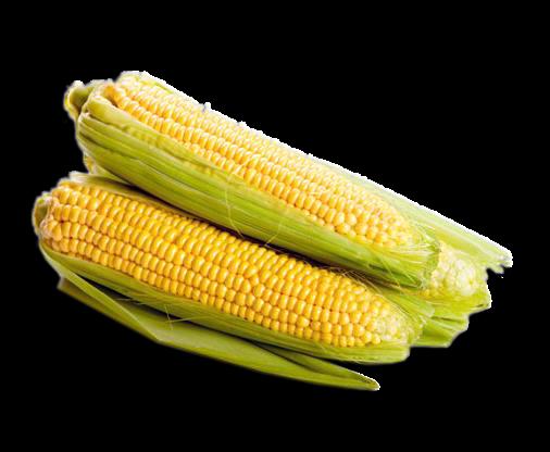 Manfaat Nasi Jagung Bagi Kesehatan Tubuh