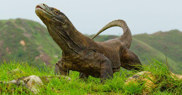 Jenis-Jenis Fauna Di Indonesia Yang Mulai Langka
