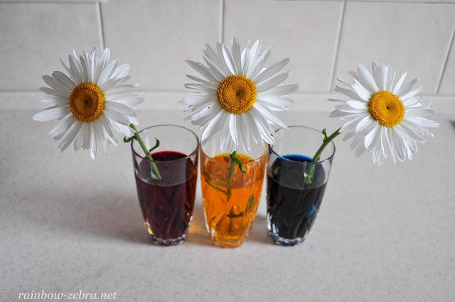 Ставим цветы в подкрашенную воду