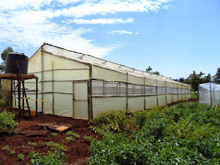 Wooden greenhouse company in Kenya