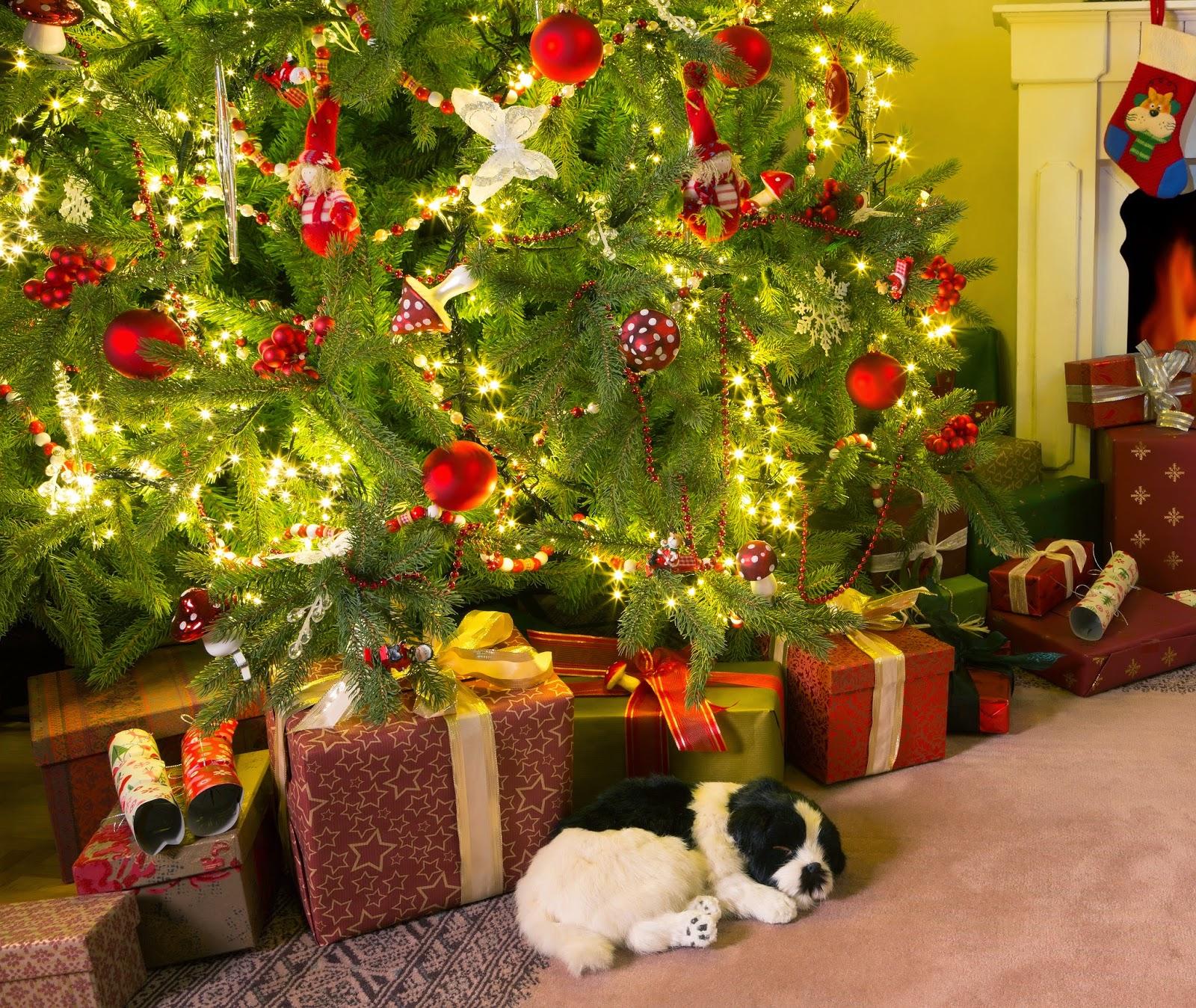 Les Traditions De Noel En Australie témoignages de stages en pays anglophones: noël aux quatre