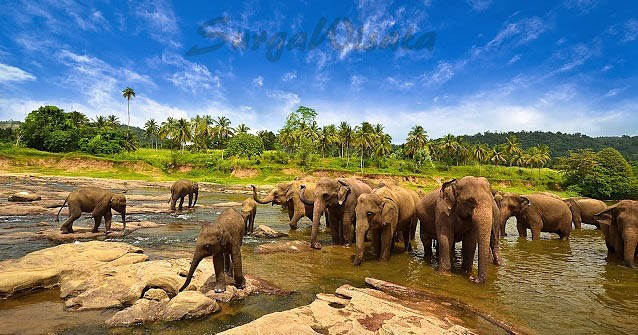 Wisata Taman Nasional Way Kambas – Lampung