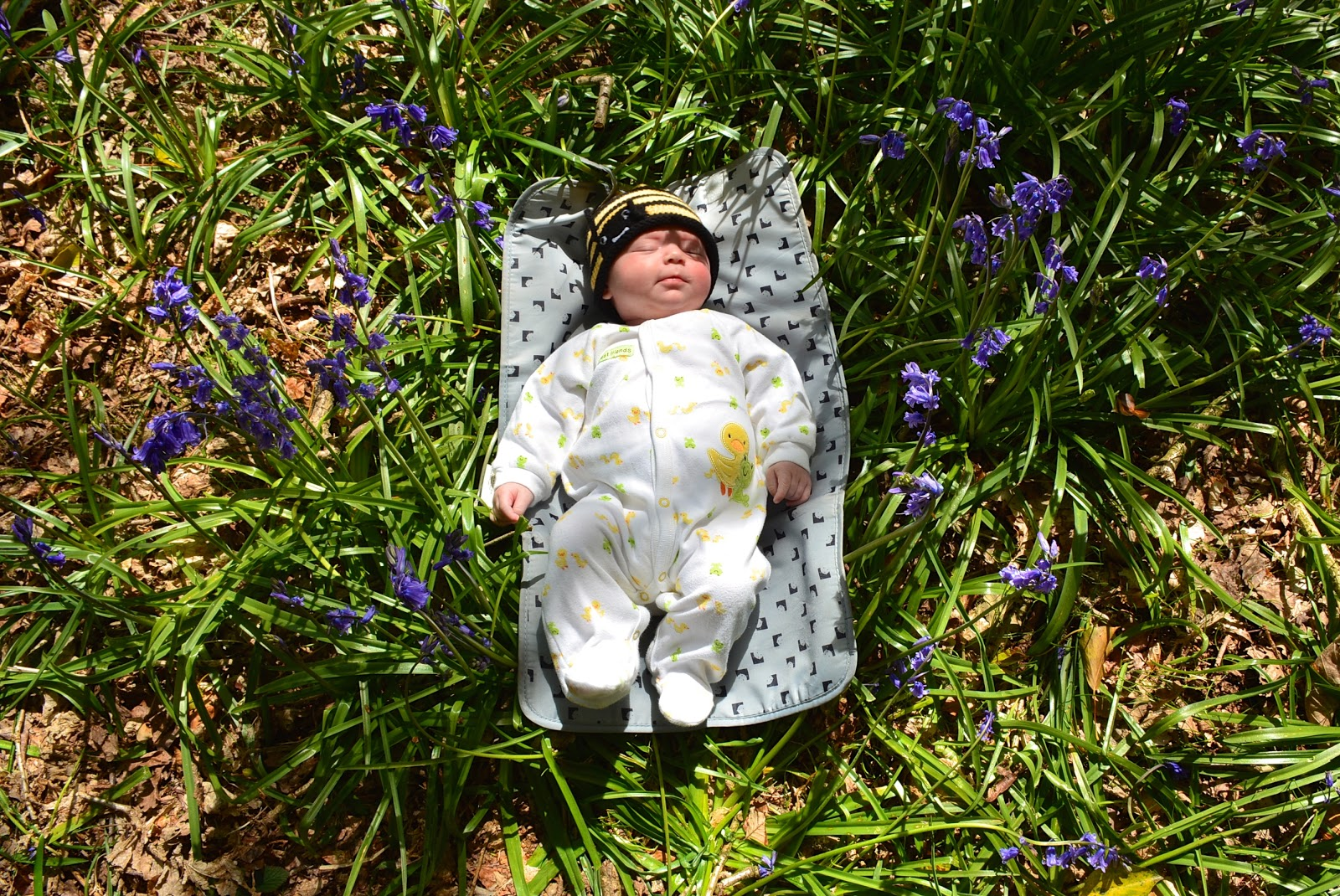 Napping in the Somerset bluebells