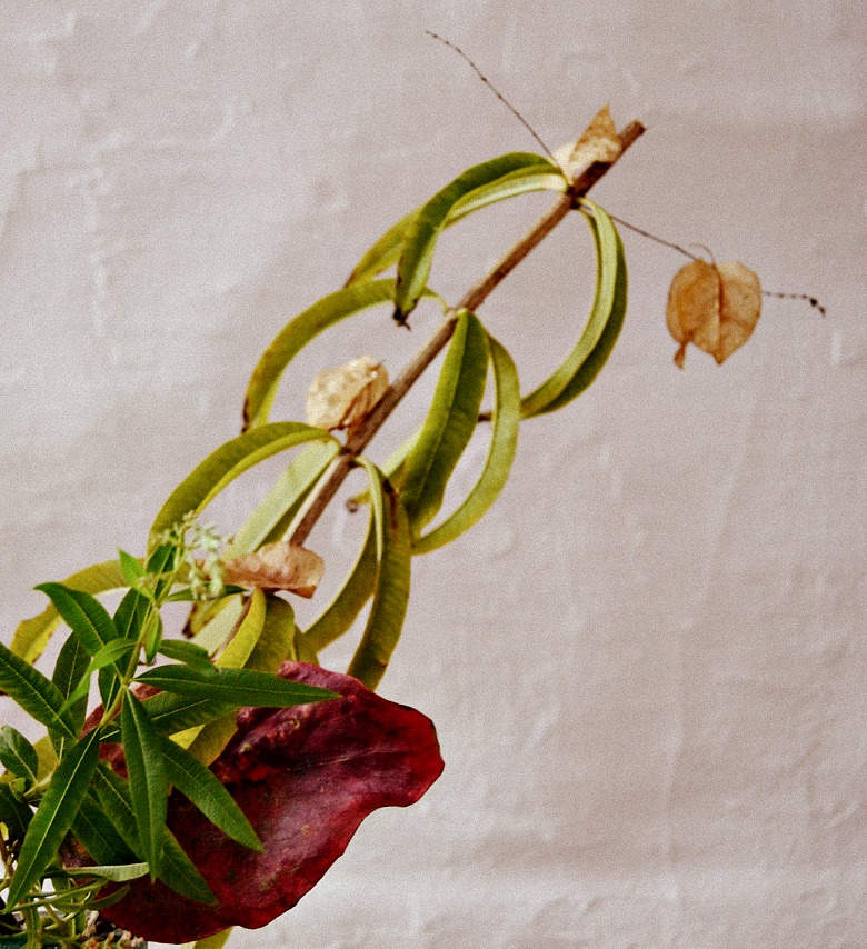 Estamos ya en otoño por eso vamos a decorarlo como se merece con una ikebana otoñal con rosas y hierba luisa