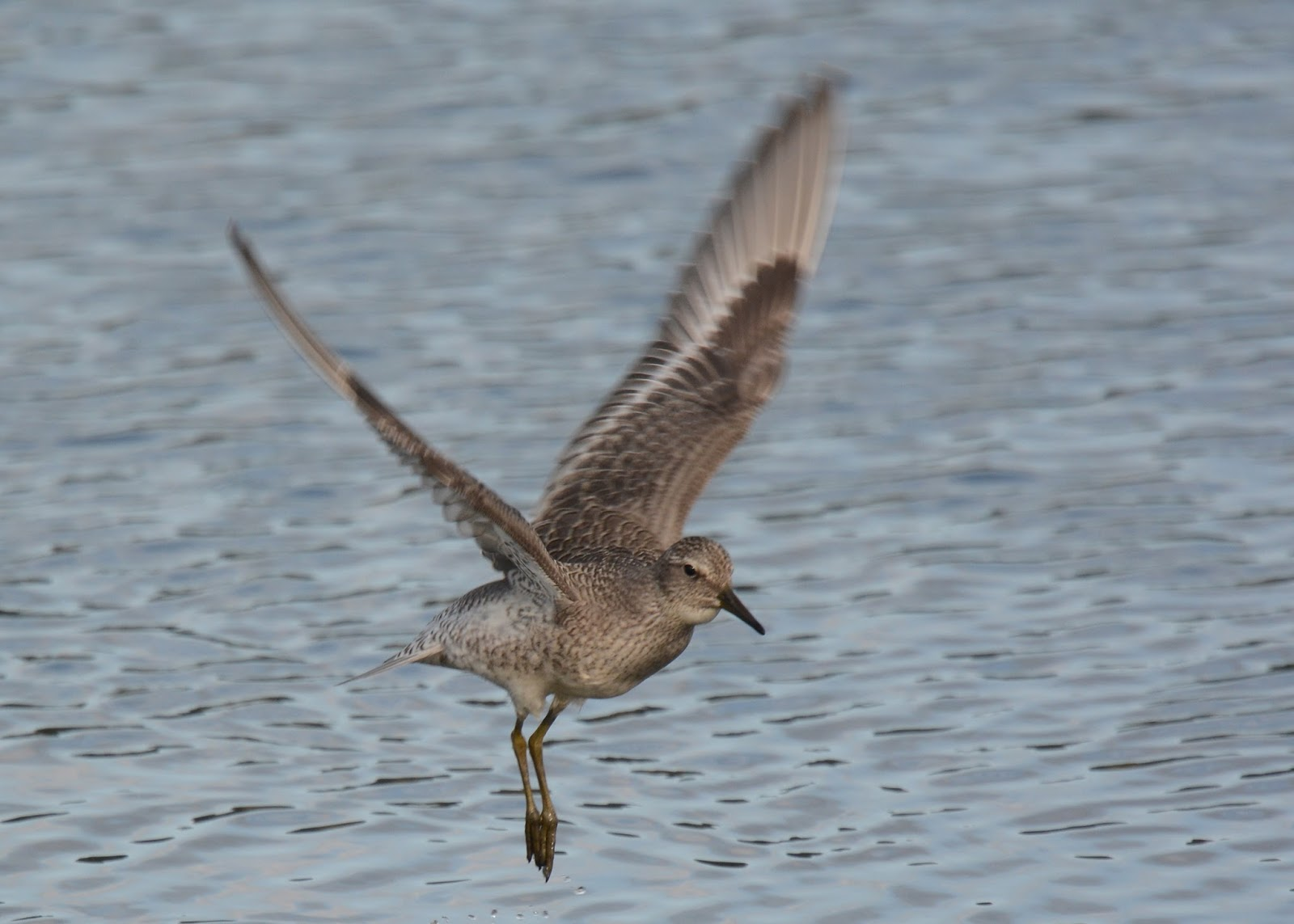 Bicycle Birder On The Axe: A Quieter Day On BHM But With A ...