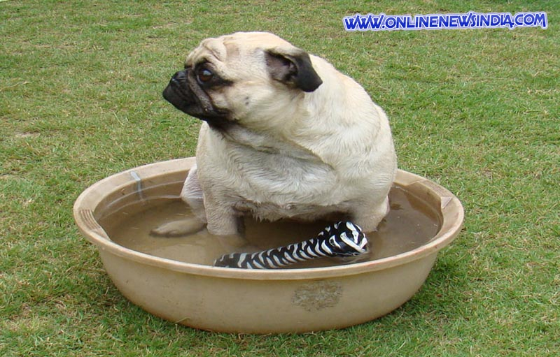 Dog sitting in water tub
