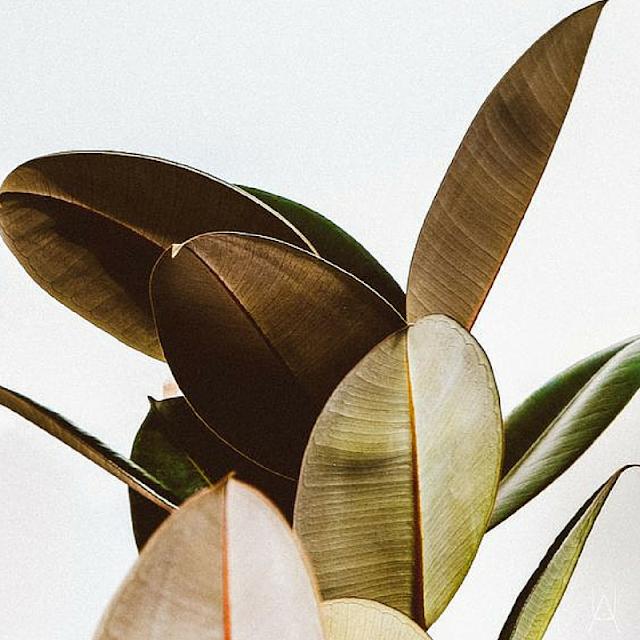 botanical inspiration photos • the Round Button blog