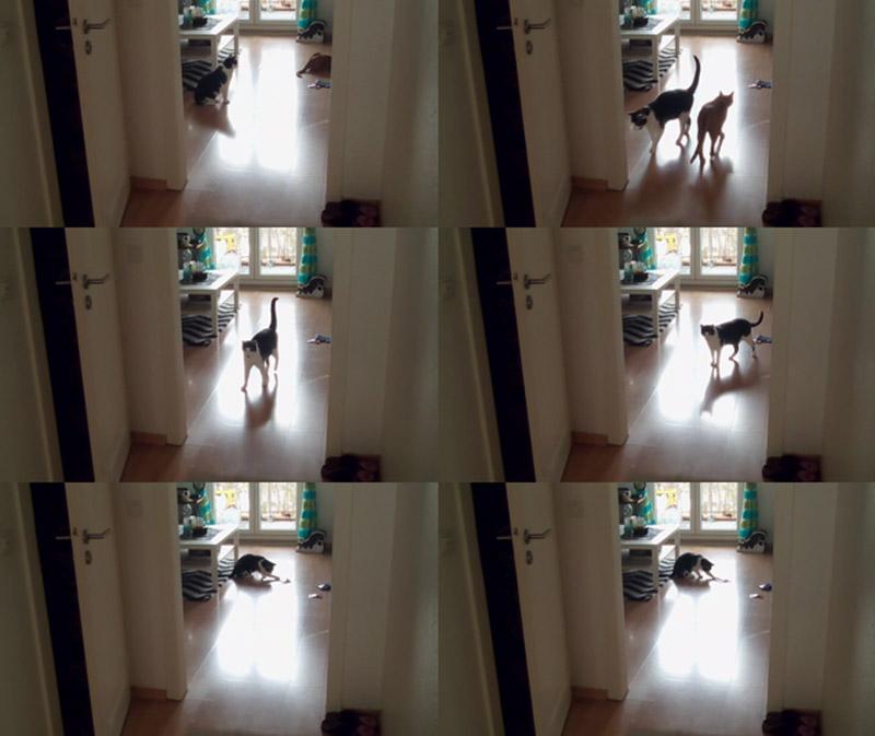 KuneCoco • Das treiben die Schnurrberts allein daheim • Screenshots