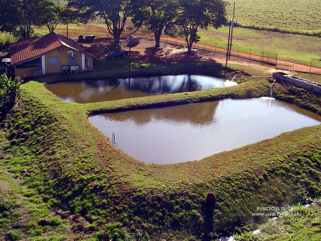 Permacultura autosuficiencia y tecnolog a piscicultura o for Cria de tilapia en estanques plasticos