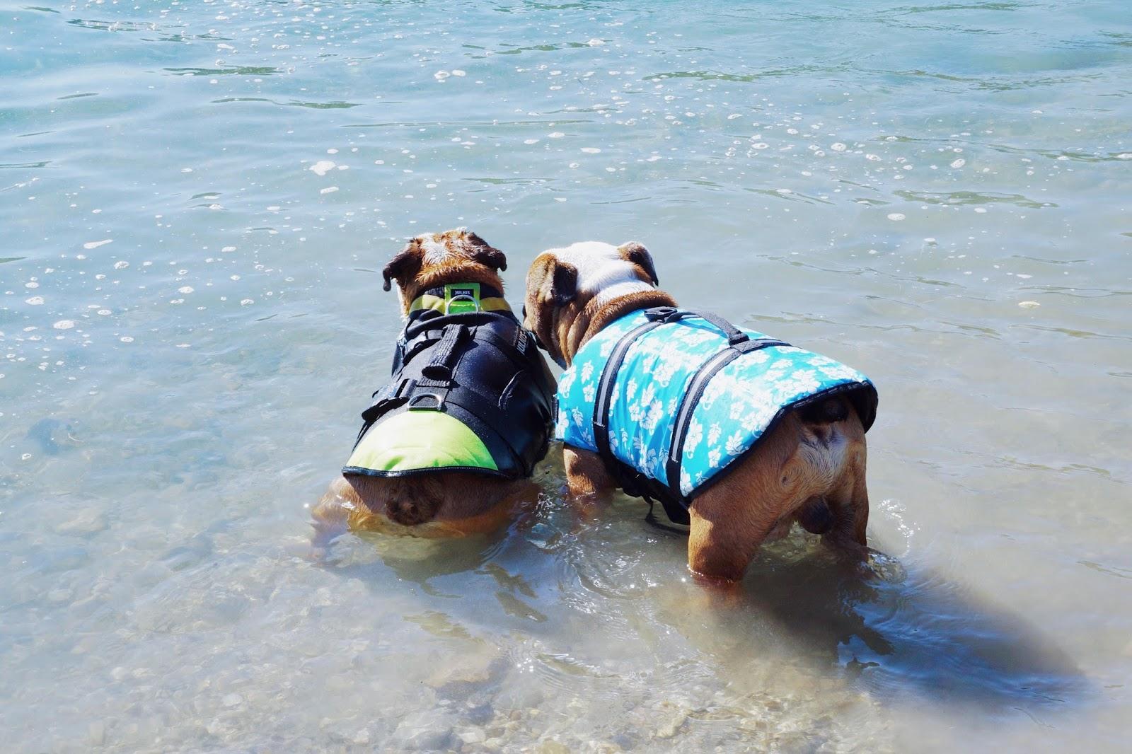 gilet de sauvetage pas cher chien bulldog  julius k9