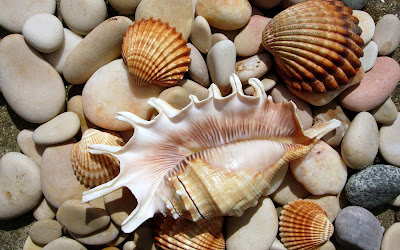 ships-stones-on-the-beach-sea