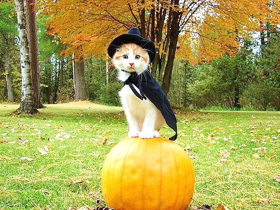 Crisis: Cute Halloween Kitten