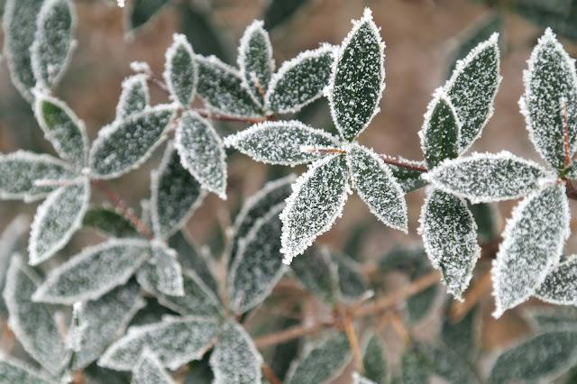 Fotografie winter ijskristallen