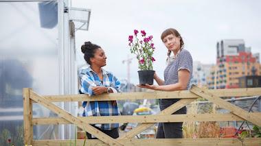 Farmopolis, el jardín flotante que 'adoptó' plantas de Chelsea Flower Show