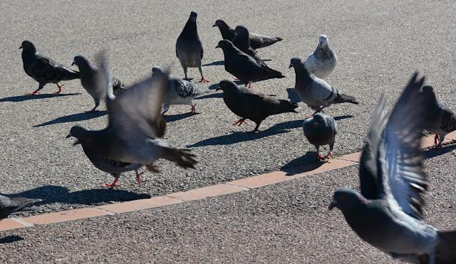 Parc Emile Duclaux Marseille pigeons