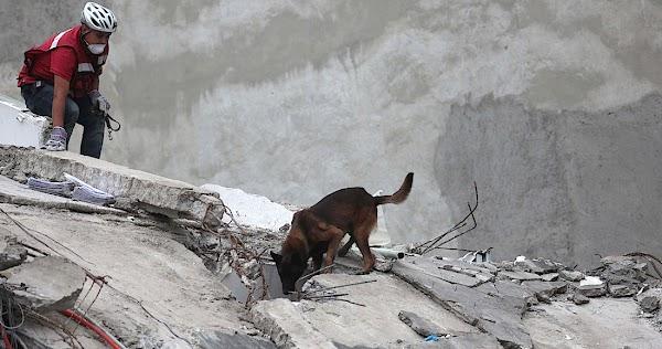 """El instinto de """"Chichí"""", una pastor belga, muestra que los milagros existen entre los escombros"""