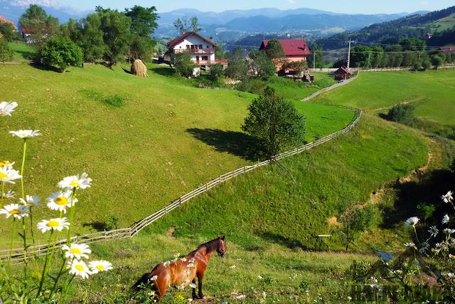 Gradini in satul Magura