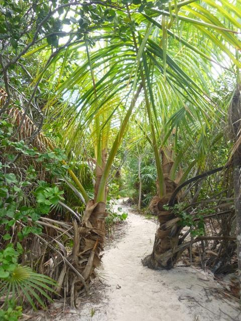 """Galley Wench Tales: Happy Trails Stocking Island """"Georgetown"""""""
