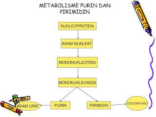 Materi Lengkap Metabolisme Asam Nukleat