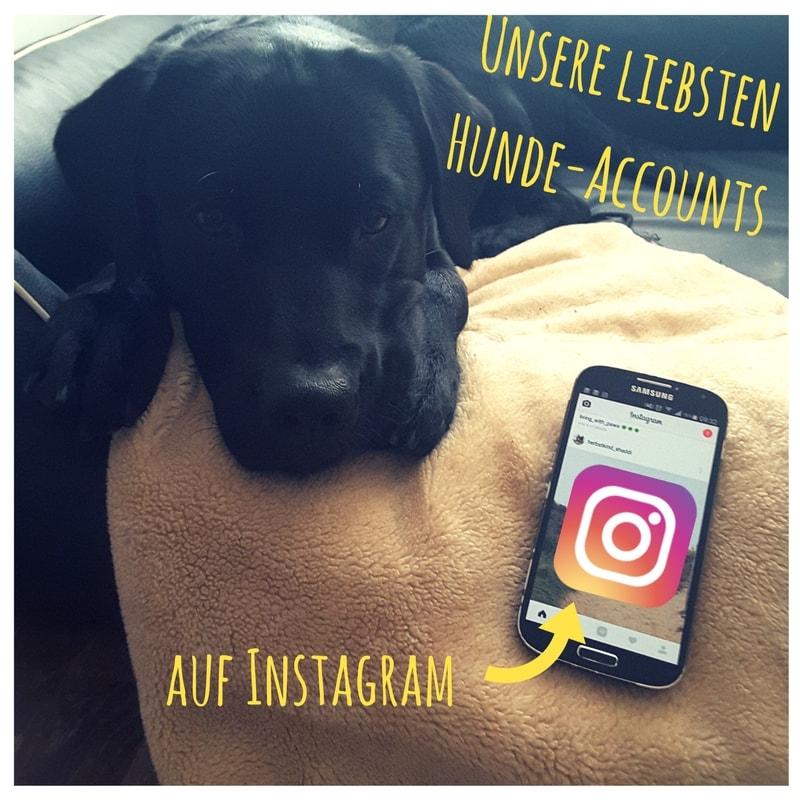 Titelbild Schwarzer Labrador mit Smartphone Instagram
