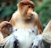 Wisata Kuliner Terbaik di Kalimantan Utara Dengan Ditemani Seekor Monyet