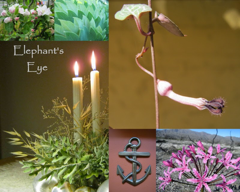 Spring Promise Apple blossom, Melianthus major leaf, Ceropegia two Advent candles, brass anchor, fire lily