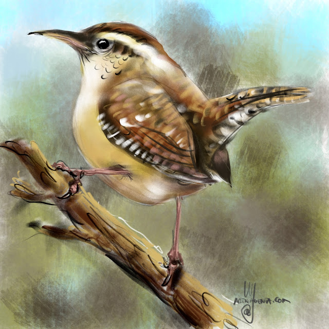 Carolina Wren bird painting by Artmagenta