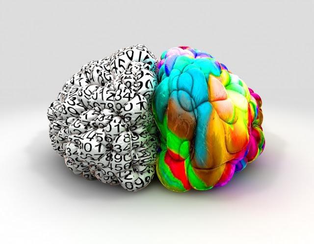 Porqué el cerebro esta dividido