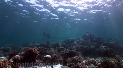 Marine Tourism in Indonesia