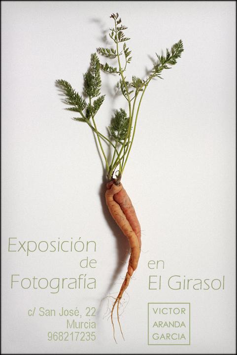 exposicion,fotografia,murcia,el_girasol,naturaleza
