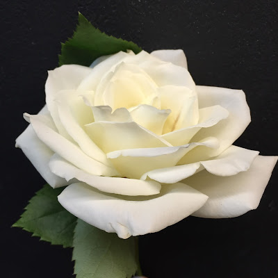 White Rose at Stein Your Florist Co.