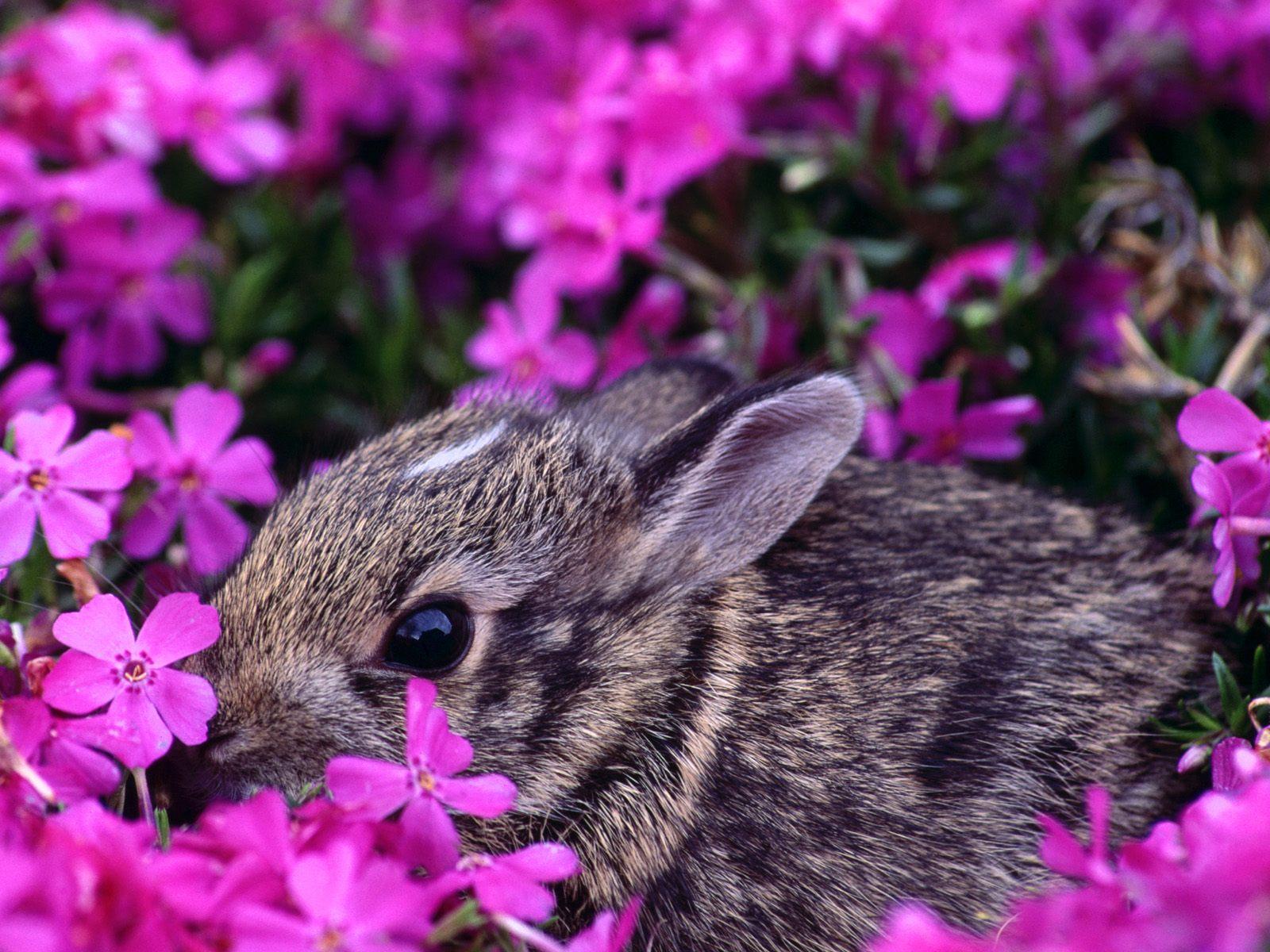 Wallpaper: Wallpaper Bunny Rabbit