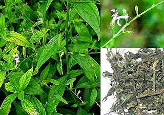 ramuan-tradisional-bronkitis