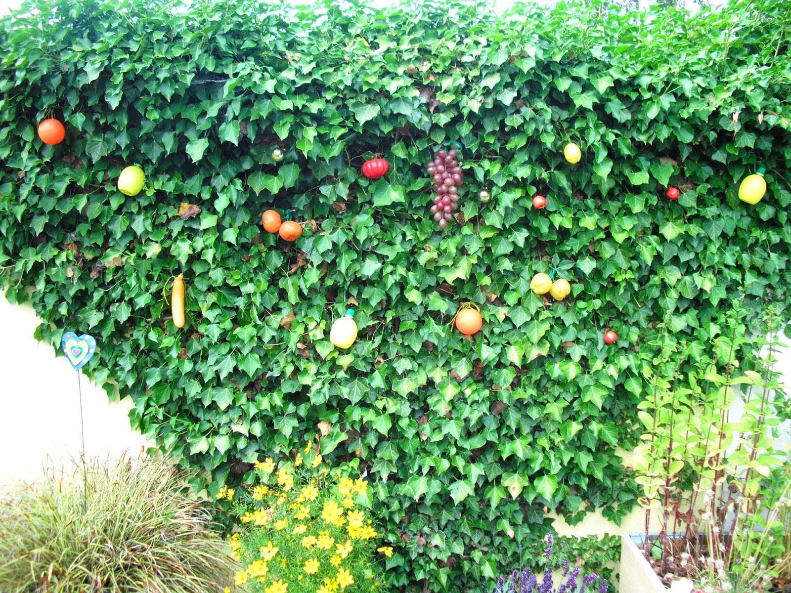Fruit Salad Tree Disease Known For Healthy Living