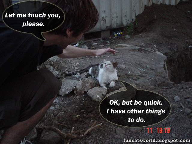 Touching Cat picture