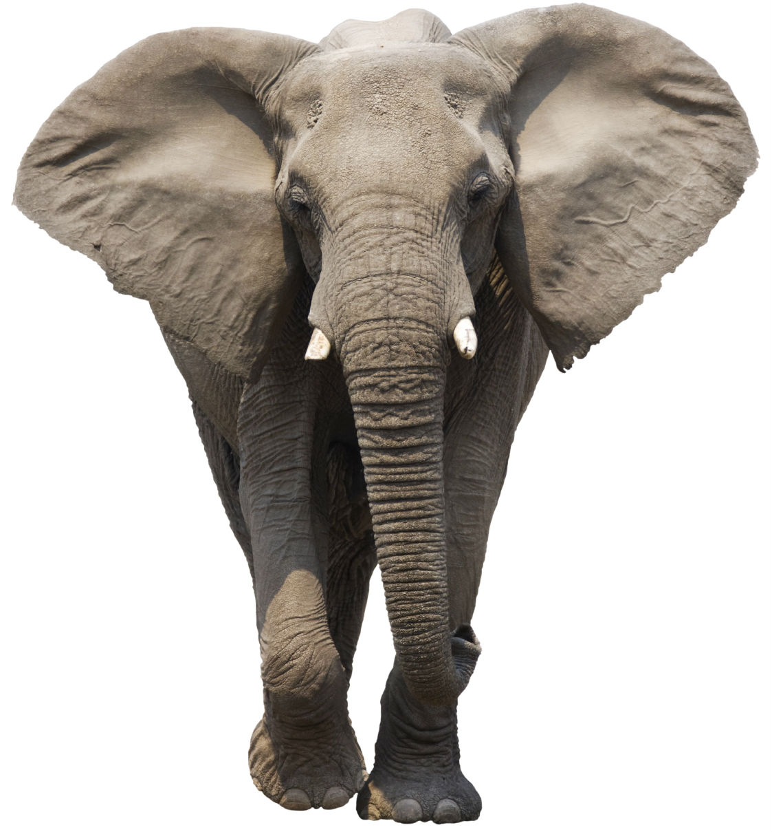 An Elephant a Day 2.0: Elephant No. 11: Terraskin Paper ...
