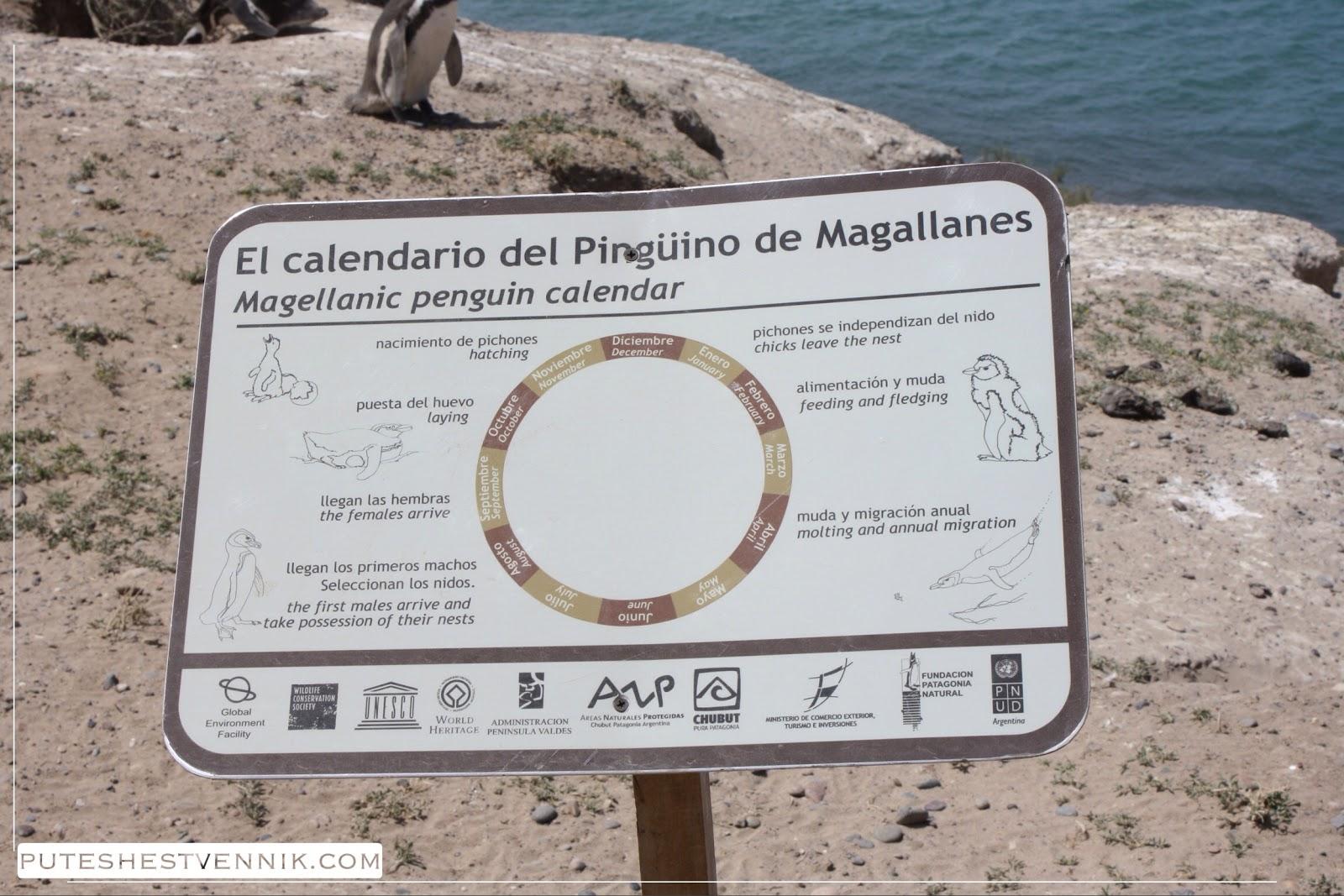 Календарь пингвинов