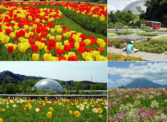 https://3.bp.blogspot.com/-3CP5xVVai-A/WTdmrqnZVZI/AAAAAAAJvCc/B2cb1JN9Iq0NsCBDgHkMj6TRA2cs1LD8gCLcB/s1600/tottori-flower-park01.jpg