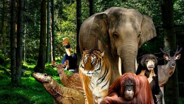 Taman Margasatwa Kebun Binatang Ragunan Jakarta