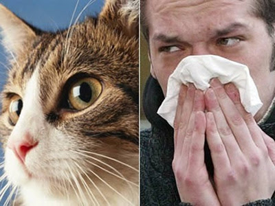 Cara Menghindari Alergi Kucing