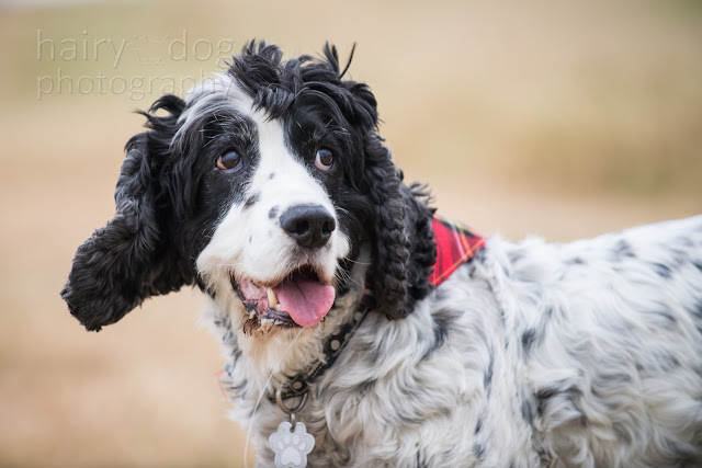 Aberdeenshire dog photographer hairy dog