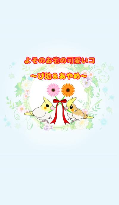 pet in friend's house~pisuke&ayame~