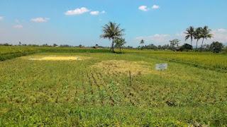 Kelebihan dan Kekurangan Membeli Tanah dijual Bekas Sawah