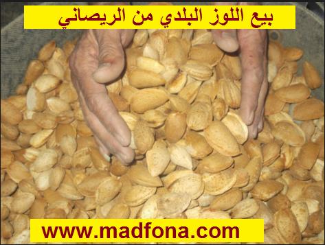بيع اللوز البلدي من الريصاني