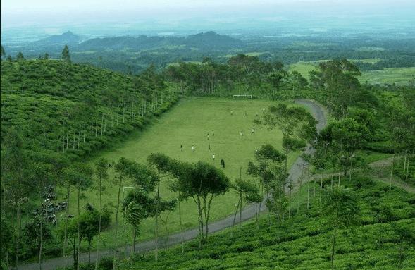 Wisata Kebun Teh Jamus di Lereng Gunung Lawu Ngawi