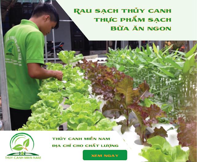 dụng cụ trồng rau thủy canh