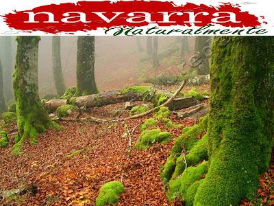 Casa Rural Urbasa Urederra www.casaruralurbasa.com  Navarra Naturalmente es diferente. ¿Vienes a Conocerla?