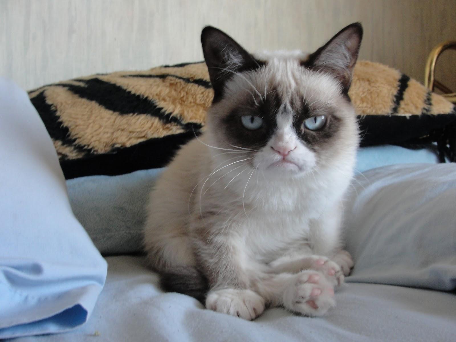 grumpy cat morning collection world