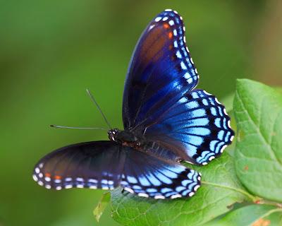 best-top-desktop-butterflies-hd-wallpaper