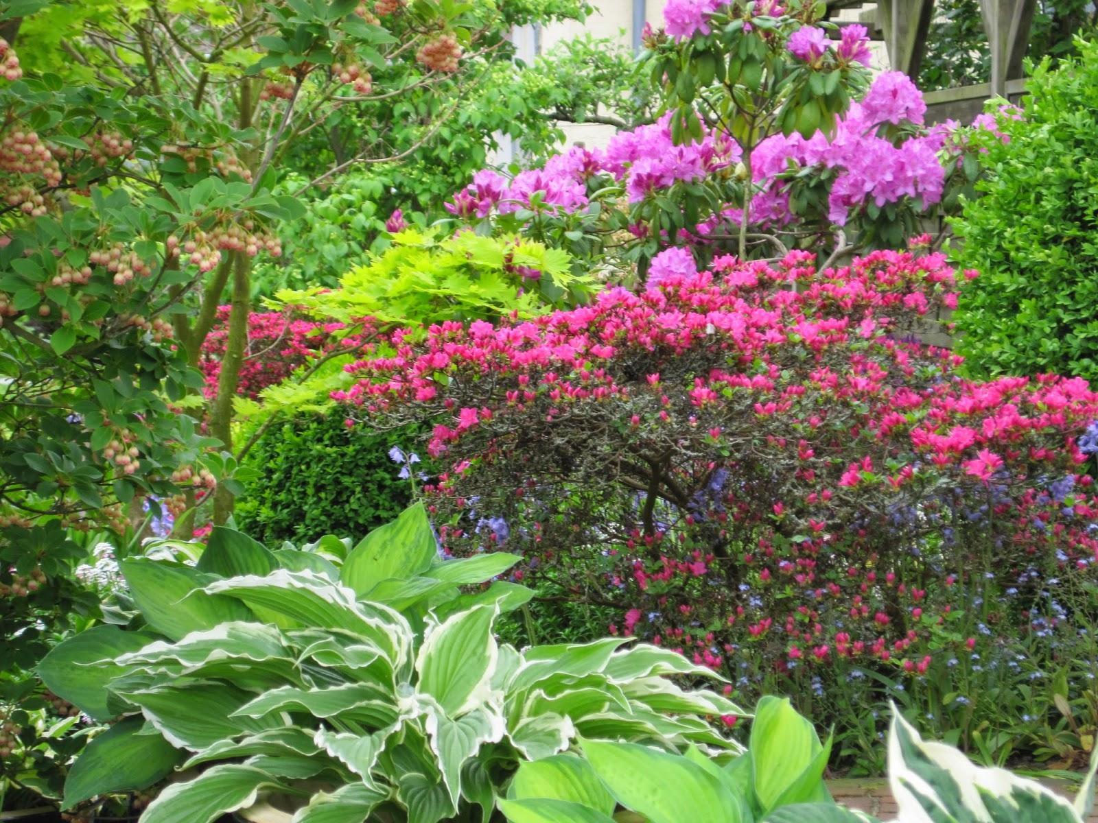 Blumen garten  Staudenflüstern: Blumengarten